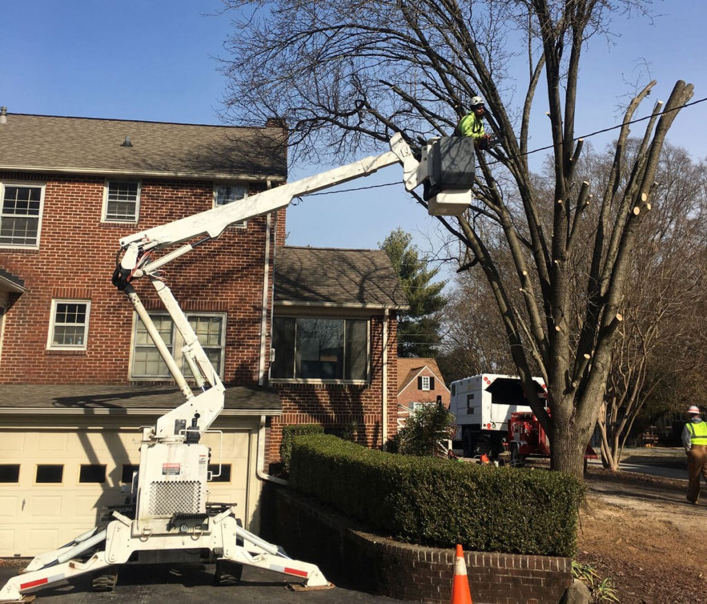 Residential Tree Services-Riviera Beach Tree Trimming and Tree Removal Services-We Offer Tree Trimming Services, Tree Removal, Tree Pruning, Tree Cutting, Residential and Commercial Tree Trimming Services, Storm Damage, Emergency Tree Removal, Land Clearing, Tree Companies, Tree Care Service, Stump Grinding, and we're the Best Tree Trimming Company Near You Guaranteed!