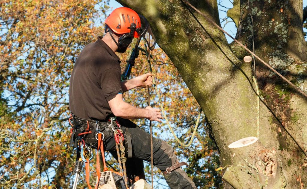 Tree Removal-Riviera Beach Tree Trimming and Tree Removal Services-We Offer Tree Trimming Services, Tree Removal, Tree Pruning, Tree Cutting, Residential and Commercial Tree Trimming Services, Storm Damage, Emergency Tree Removal, Land Clearing, Tree Companies, Tree Care Service, Stump Grinding, and we're the Best Tree Trimming Company Near You Guaranteed!