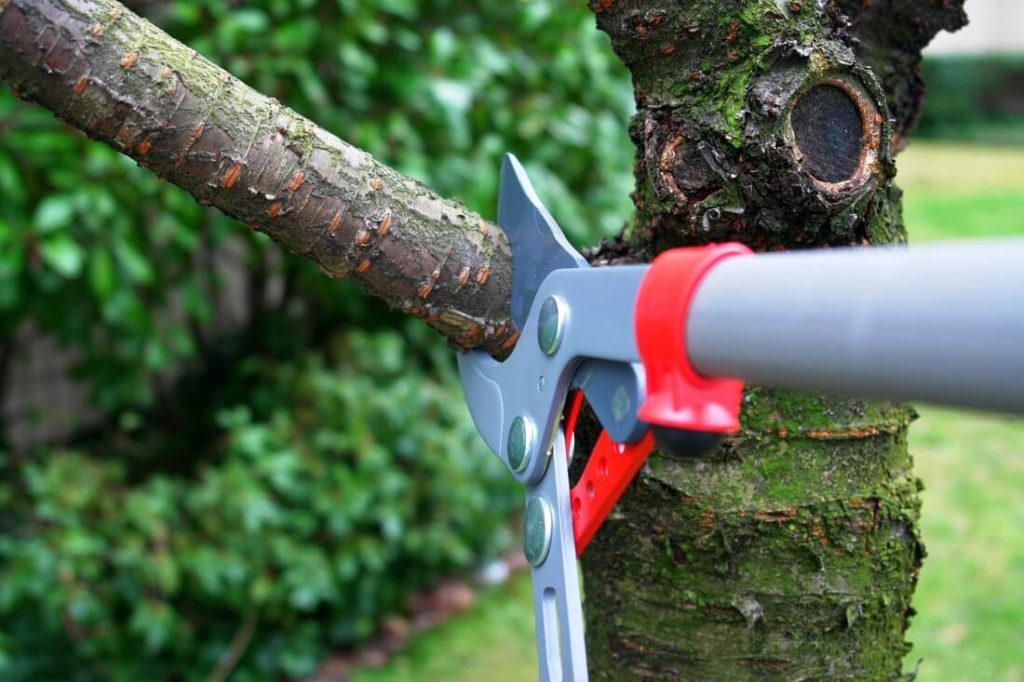 Tree Trimming-Riviera Beach Tree Trimming and Tree Removal Services-We Offer Tree Trimming Services, Tree Removal, Tree Pruning, Tree Cutting, Residential and Commercial Tree Trimming Services, Storm Damage, Emergency Tree Removal, Land Clearing, Tree Companies, Tree Care Service, Stump Grinding, and we're the Best Tree Trimming Company Near You Guaranteed!