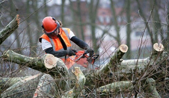 Emergency Tree Removal-Riviera Beach Tree Trimming and Tree Removal Services-We Offer Tree Trimming Services, Tree Removal, Tree Pruning, Tree Cutting, Residential and Commercial Tree Trimming Services, Storm Damage, Emergency Tree Removal, Land Clearing, Tree Companies, Tree Care Service, Stump Grinding, and we're the Best Tree Trimming Company Near You Guaranteed!