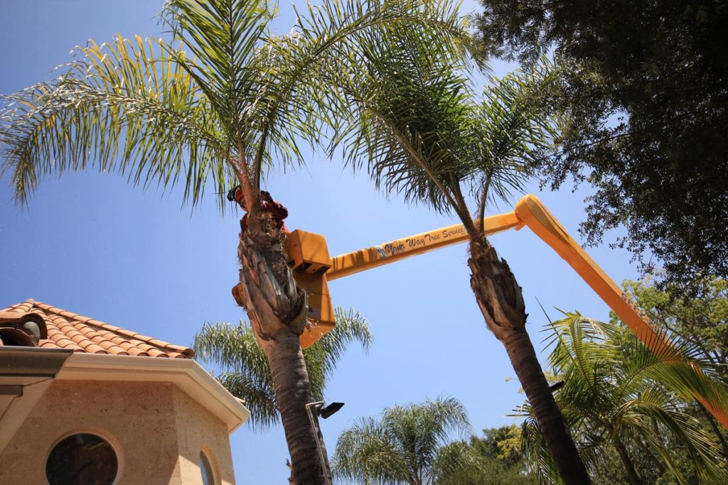 Palm Tree Removal-Riviera Beach Tree Trimming and Tree Removal Services-We Offer Tree Trimming Services, Tree Removal, Tree Pruning, Tree Cutting, Residential and Commercial Tree Trimming Services, Storm Damage, Emergency Tree Removal, Land Clearing, Tree Companies, Tree Care Service, Stump Grinding, and we're the Best Tree Trimming Company Near You Guaranteed!