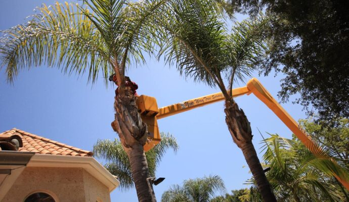 Palm Tree Trimming & Palm Tree Removal-Riviera Beach Tree Trimming and Tree Removal Services-We Offer Tree Trimming Services, Tree Removal, Tree Pruning, Tree Cutting, Residential and Commercial Tree Trimming Services, Storm Damage, Emergency Tree Removal, Land Clearing, Tree Companies, Tree Care Service, Stump Grinding, and we're the Best Tree Trimming Company Near You Guaranteed!