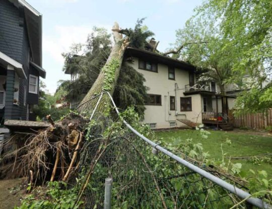 Storm Damage-Riviera Beach Tree Trimming and Tree Removal Services-We Offer Tree Trimming Services, Tree Removal, Tree Pruning, Tree Cutting, Residential and Commercial Tree Trimming Services, Storm Damage, Emergency Tree Removal, Land Clearing, Tree Companies, Tree Care Service, Stump Grinding, and we're the Best Tree Trimming Company Near You Guaranteed!