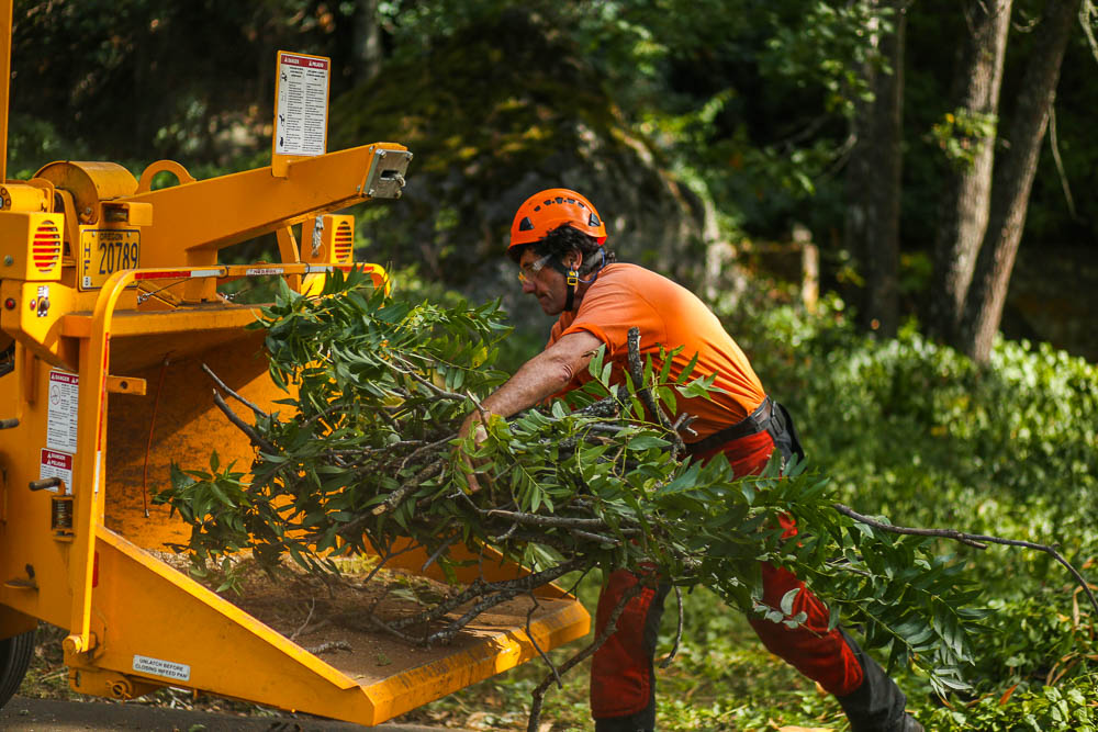 Tree Doctor-Riviera Beach Tree Trimming and Tree Removal Services-We Offer Tree Trimming Services, Tree Removal, Tree Pruning, Tree Cutting, Residential and Commercial Tree Trimming Services, Storm Damage, Emergency Tree Removal, Land Clearing, Tree Companies, Tree Care Service, Stump Grinding, and we're the Best Tree Trimming Company Near You Guaranteed!