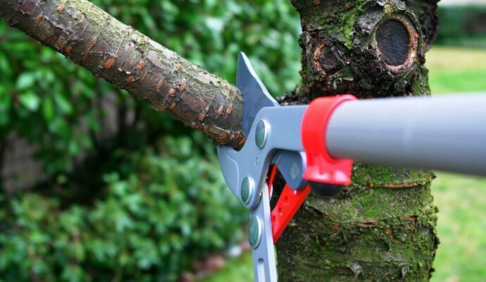 Tree Trimming Services-Riviera Beach Tree Trimming and Tree Removal Services-We Offer Tree Trimming Services, Tree Removal, Tree Pruning, Tree Cutting, Residential and Commercial Tree Trimming Services, Storm Damage, Emergency Tree Removal, Land Clearing, Tree Companies, Tree Care Service, Stump Grinding, and we're the Best Tree Trimming Company Near You Guaranteed!