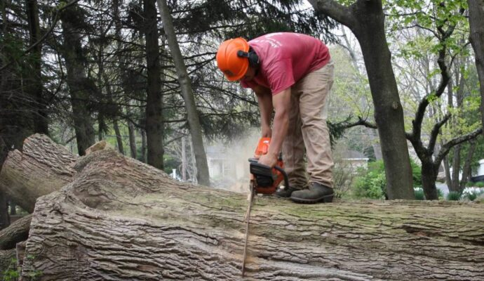 Riviera-Beach-Tree-Trimming-and-Tree-Removal-Services-Header-Image-1024x614-We Offer Tree Trimming Services, Tree Removal, Tree Pruning, Tree Cutting, Residential and Commercial Tree Trimming Services, Storm Damage, Emergency Tree Removal, Land Clearing, Tree Companies, Tree Care Service, Stump Grinding, and we're the Best Tree Trimming Company Near You Guaranteed!
